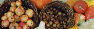Festa d'autunno a Bagnacavallo