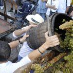 Sagra vino tipico romagnolo a Cotignola
