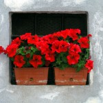 balconi fioriti santarcangelo