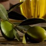 sagra ulivo brisighella 2013