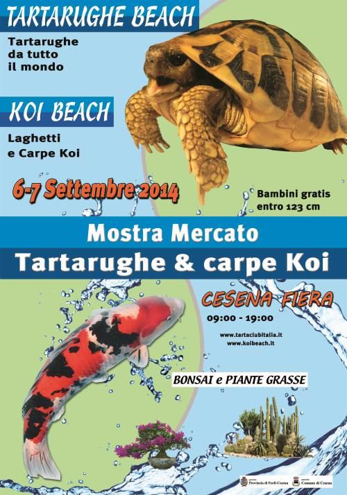 Mostra delle tartarughe e delle carpe koi alla fiera di cesena for Laghetti e carpe koi