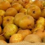 sagra pera volpina brisighella
