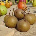 Sagra pera volpina a Brisighella